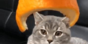 casco para gato